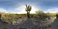 Saguaro National Park (East), Tucson, 2010